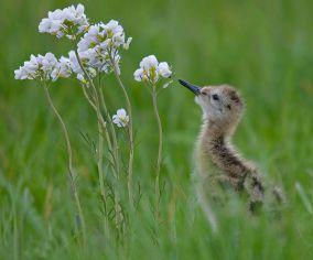 Zorgen over stand weidevogels