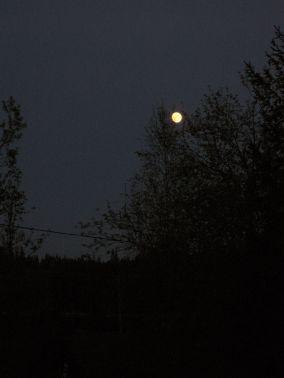Nacht van de nacht; Natuerferiening Bakkefean doet ook mee!