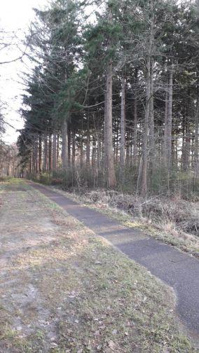 Zorgen over plannen voor massale boomkap door Staatsbosbeheer